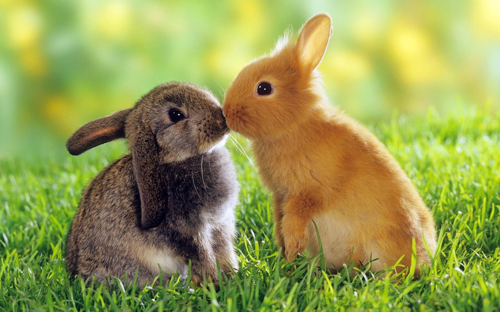 Thế giới động vật luôn ẩn chứa những điều thú vị